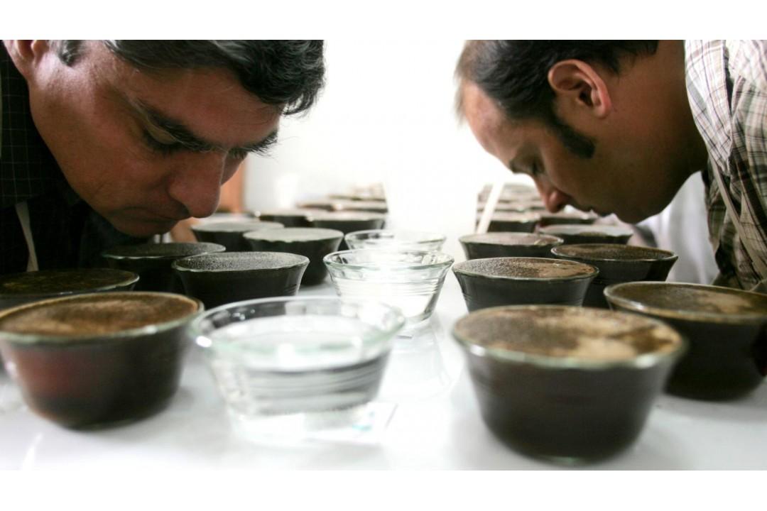 Профессиональная дегустация кофе